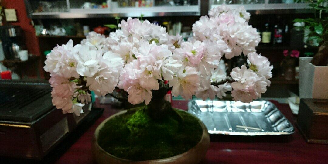 夜会桜さんの背景画像