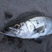気まぐれ釣り人のプロフィール画像