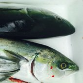 釣り人Sさんのプロフィール画像