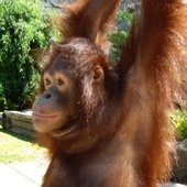 OrangUtanのプロフィール画像