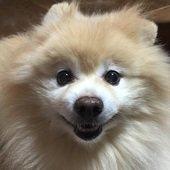 愛犬ロンさんのプロフィール画像