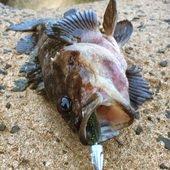 魚好きさんのプロフィール画像