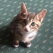 たぬき猫のプロフィール画像