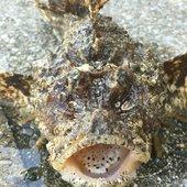 釣り吉四平さんのプロフィール画像