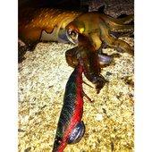 ama fishさんのプロフィール画像