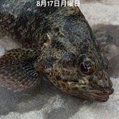 ぐっchanのプロフィール画像