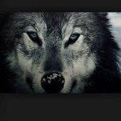 真夜中の狼さんのプロフィール画像