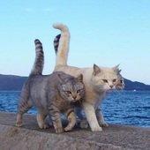 釣り猫のプロフィール画像