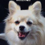リズ(チームN)さんのプロフィール画像