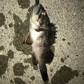 釣り人のプロフィール画像