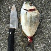 へっぽこズボ釣り師のプロフィール画像