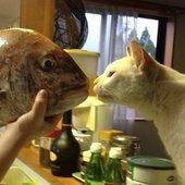 釣り猫さんのプロフィール画像