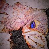 サガミのウミのササヤンさんのプロフィール画像
