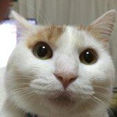 カービィさんのプロフィール画像