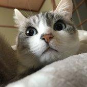LISAのプロフィール画像