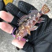 ビギナー釣り師 Lv 3のプロフィール画像