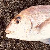 魚ーさんのアイコン