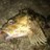 ひだりばし🥢(釣り垢)のプロフィール画像
