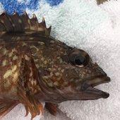 rikufisherのプロフィール画像