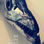 Hongjie Xiaoさんのプロフィール画像