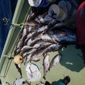 釣り丸さんのプロフィール画像