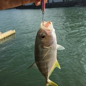 釣り男くんのプロフィール画像