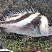元川釣り半太のプロフィール画像