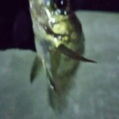 釣りキッチ3号さんのプロフィール画像