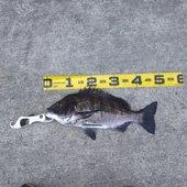 南の黒鯛師さんのプロフィール画像