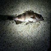 らび(新米釣り師)さんのプロフィール画像