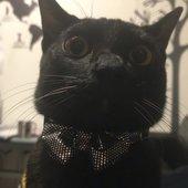 ゴリラさんのプロフィール画像