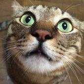 もーヒマラヤン&ちーキジトラさんのプロフィール画像