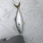 釣り素人さんのプロフィール画像