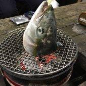 釣りにっく みのさんのプロフィール画像