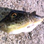 お魚ツバス大好きクンさんのプロフィール画像