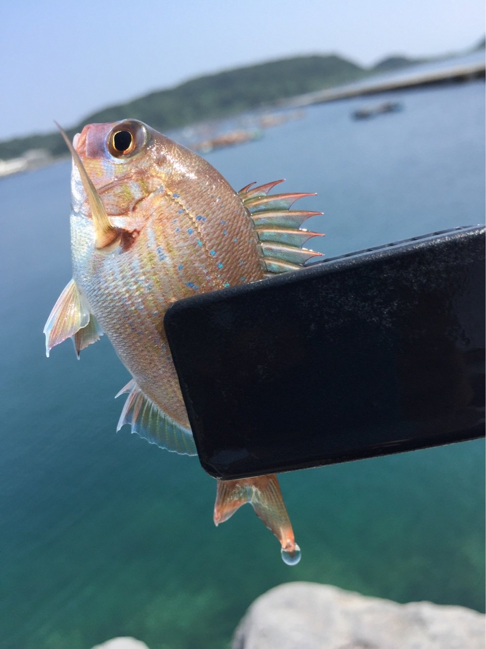 カズワタベさんの投稿画像,写っている魚はマダイ