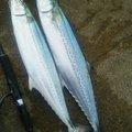 エボリューションさんの新潟県燕市での釣果写真
