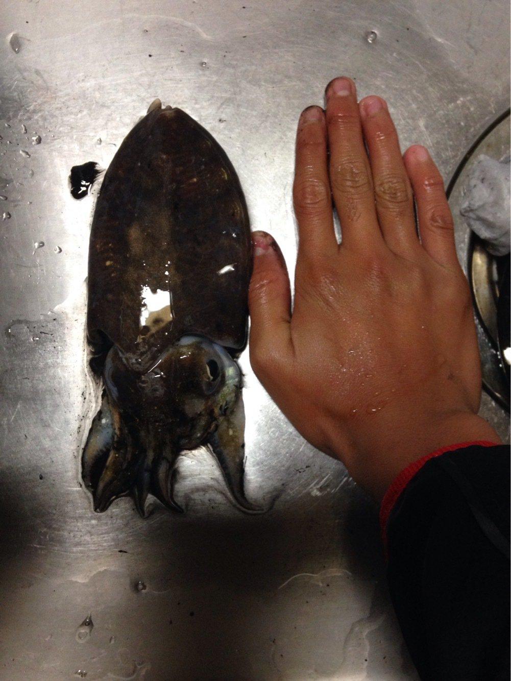 ひかるさんの投稿画像,写っている魚はコウイカ