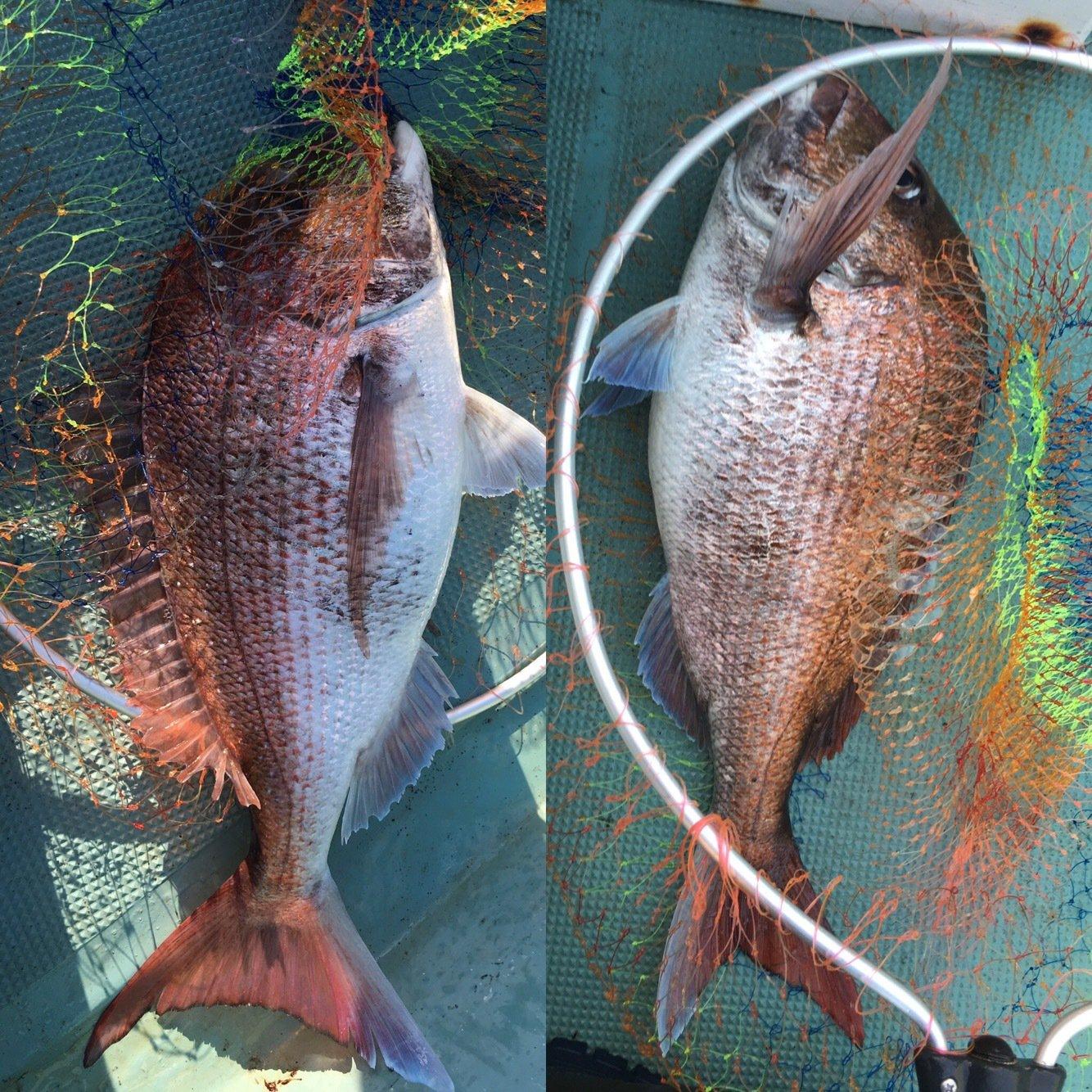 なるさんの投稿画像,写っている魚はマダイ