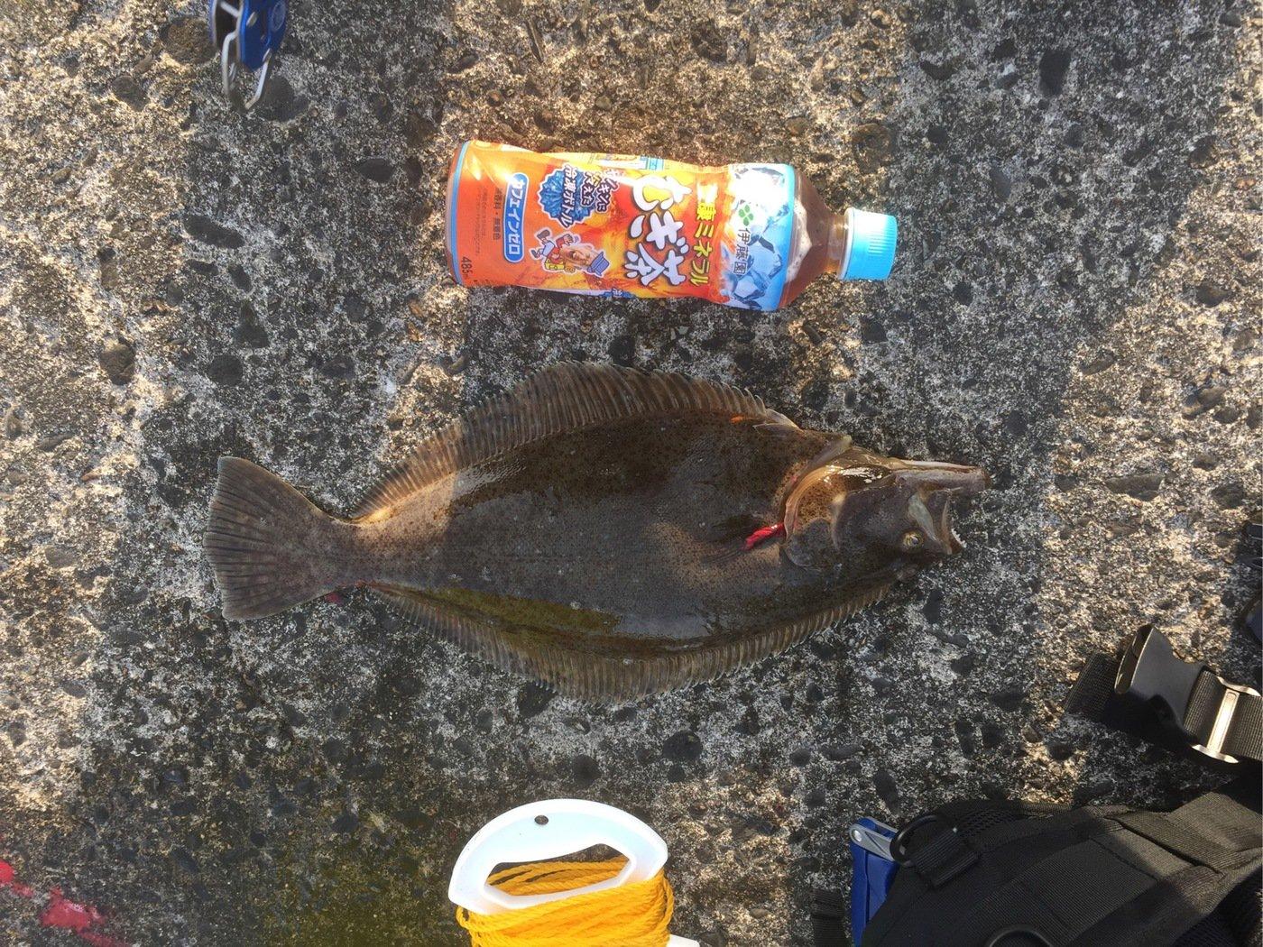 テリーさんの投稿画像,写っている魚はヒラメ