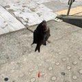 しげきさんの兵庫県でのスズメダイの釣果写真