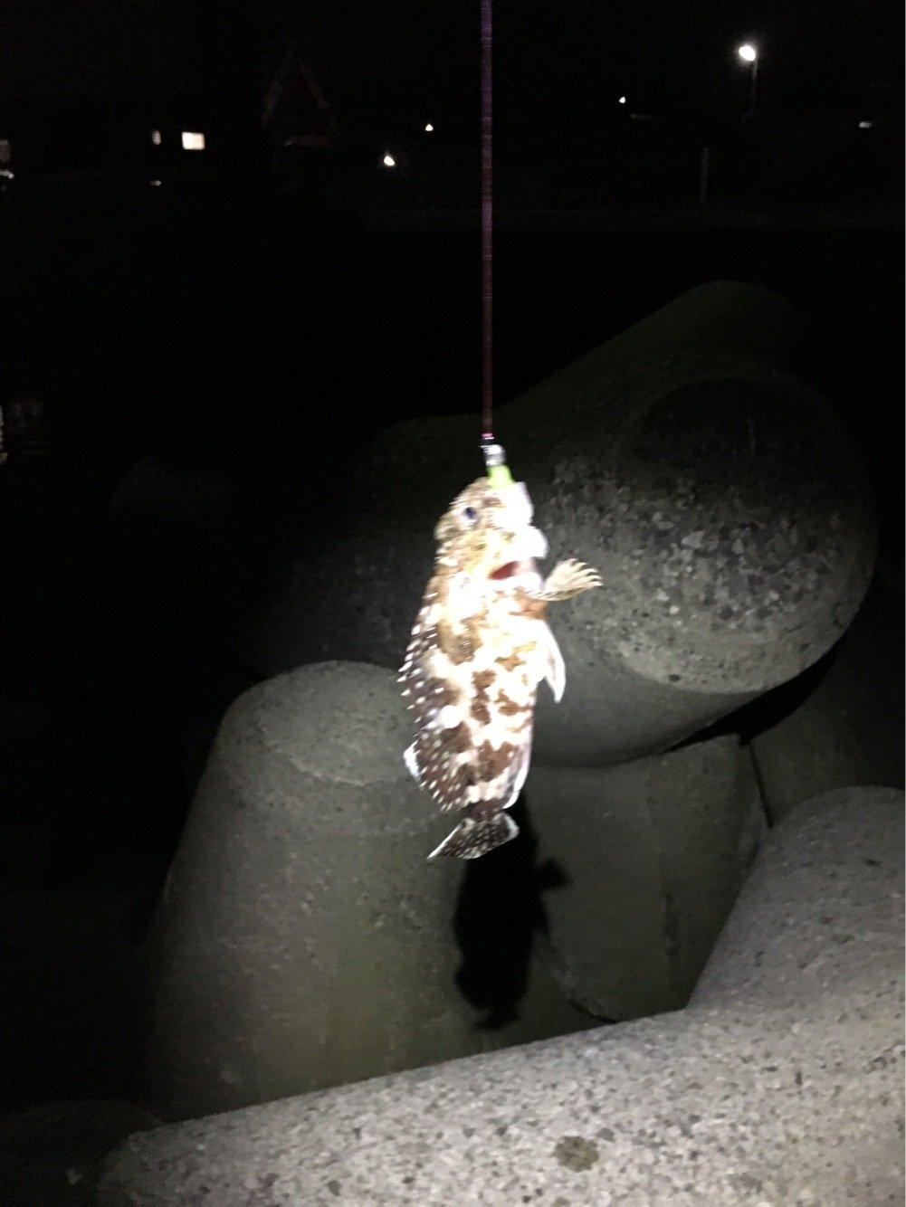 ともさんの投稿画像,写っている魚はカサゴ