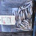 リズ(チームN)さんの神奈川県でのワカサギの釣果写真
