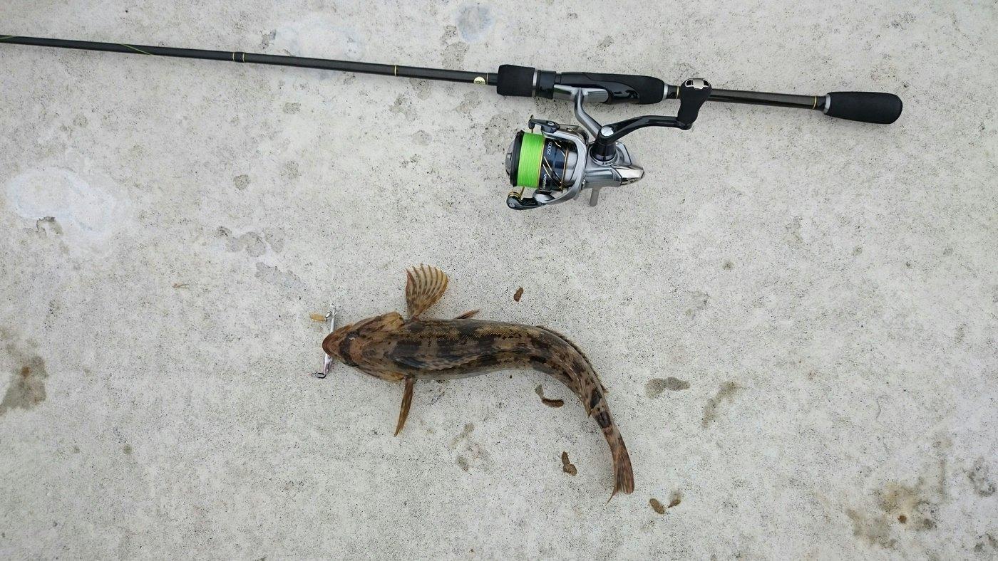のばさんの投稿画像,写っている魚はアイナメ
