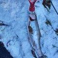 憲司さん@爆釣祈願さんの長野県安曇野市での釣果写真
