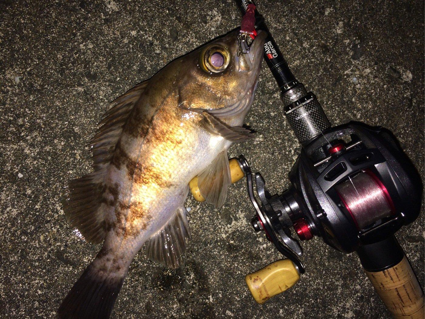 ささきょんさんの投稿画像,写っている魚はシロメバル