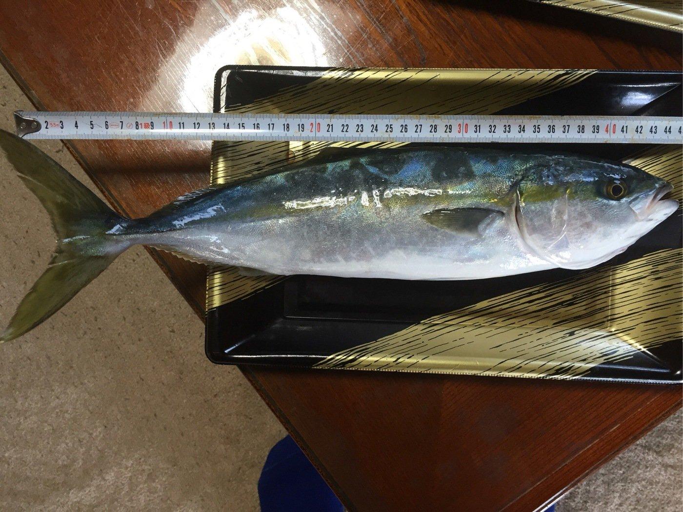 佐藤 紘さんの投稿画像,写っている魚はブリ