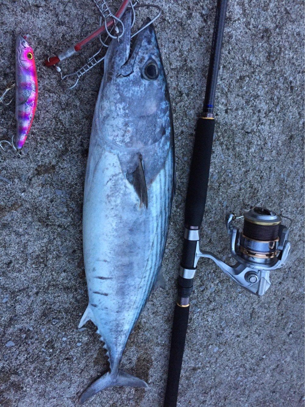 ヨウスケさんの投稿画像,写っている魚はハガツオ