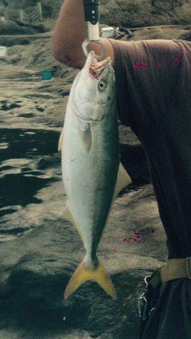 湘南の釣り師さんの投稿画像,写っている魚はブリ