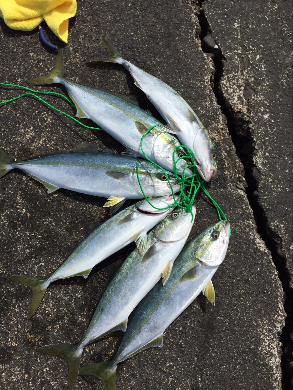 佐藤 紘さんの投稿画像,写っている魚は